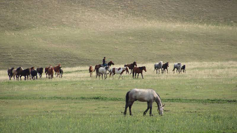 01-Georgia-horse-riding-travel-retreat