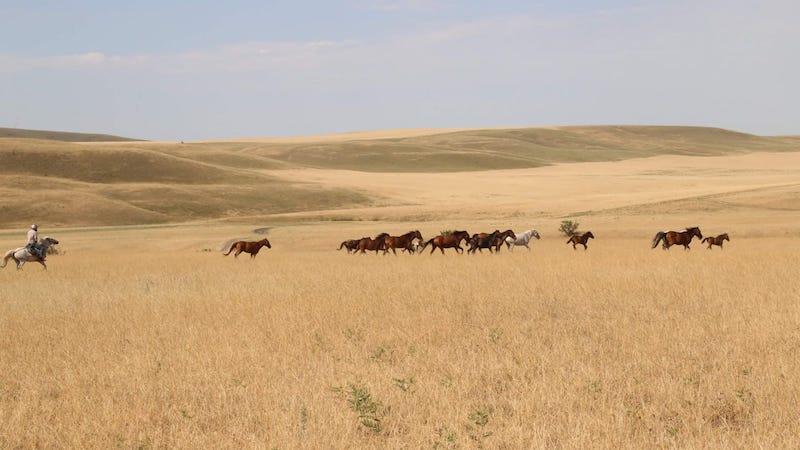 04-horse-travel-georgia
