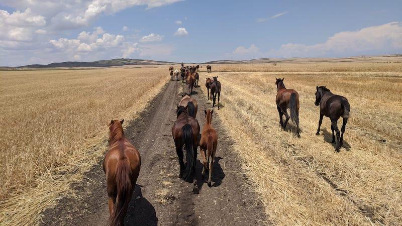 Horses-Farm-holiday-Georgia-empowerment-herd